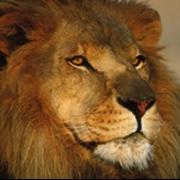 Le_Lion_07