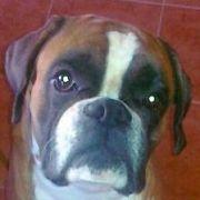 Quiviro
